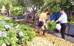 Dọn dẹp đường hoa Nguyễn Huệ, nhiều người vượt rào, tranh giành hoa