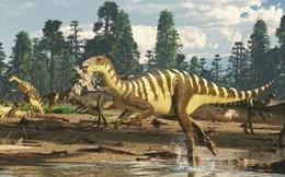 Phát hiện hóa thạch khủng long mới ở Australia: Chỉ nhỏ như con chuột túi