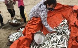 Ảnh: Cá trích mắc dày lưới, ngư dân Hà Tĩnh gỡ mỏi tay