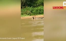 Thế giới động vật: Báo đốm đoạt mạng cá sấu trong tích tắc