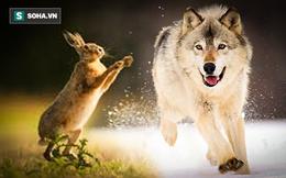 Thỏ ăn thịt sói ra sao? Câu chuyện giúp bạn có thể tìm ra mấu chốt bứt phá trước đối thủ