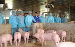 Ngân hàng giảm lãi vay cho khách vay thiệt hại vì dịch tả lợn châu Phi