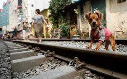 24h qua ảnh: Đường tàu hỏa chạy qua khu dân cư ở Hà Nội lên báo Tây