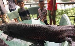 """Sự thật thông tin người dân Hà Nội bắt được cá """"khủng"""" hơn 1 tạ trên sông Nhuệ"""