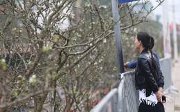 Hoa lê rừng giá bạc triệu ở Hà Nội