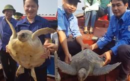 Đi đánh cá bắt được rùa biển quý hiếm đe dọa tuyệt chủng
