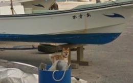 Chú chó Nhật 'hủy hoại' mọi khung hình của Google Street View vì đuổi theo camera