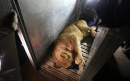 """Ám ảnh """"vườn thú địa ngục"""", nơi động vật khổ sở chết mòn ở Gaza"""