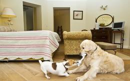 Nếu bạn đang sở hữu thú cưng vậy thì khi thiết kế nhà bạn đừng quên 5 điều 'sống còn' này