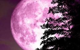 Hôm nay sẽ xuất hiện hiện tượng mặt trăng hồng kỳ thú