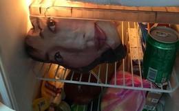 """Mở tủ lạnh, người chồng """"đứng hình"""" khi nhìn thấy khuôn mặt cô gái mỉm cười bên trong"""