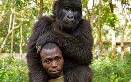 Khỉ đột tạo dáng như người trong bức ảnh selfie gây 'bão' mạng