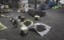 Nhà máy chế bom của kẻ khủng bố ở Sri Lanka