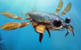 Hóa thạch 90 triệu năm trước hé lộ ngoại hình loài giáp xác kỳ quái