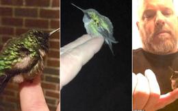 Lạ lùng chú chim ruồi năm nào cũng quay về thăm ân nhân