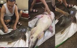 """Bắt được """"thủy quái"""" khủng trên sông nặng hơn 20kg, bán giá gần 7 triệu đồng"""