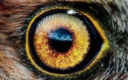 """Giải mã """"giác quan thứ 6"""" của động vật: Bí mật mới khám phá của Google Earth"""
