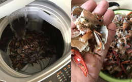 Lười rửa sạch, cặp vợ chồng cho tôm hùm đất vào máy giặt để quay và cái kết
