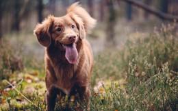 """Cách tạo dấu ấn và thu phục nhân tâm của người khôn ngoan: Hãy """"lắng nghe như một chú chó""""!"""
