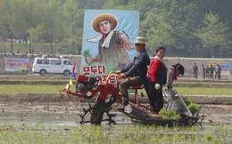 24h qua ảnh: Nông dân Triều Tiên cấy lúa bằng máy