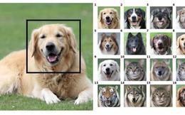 Công cụ đổi mặt này có thể biến thú cưng của bạn thành bất cứ con vật nào