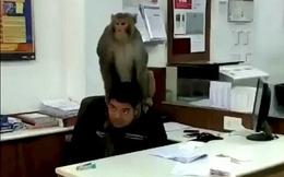 Rảnh rỗi sinh nông nổi, 'mỹ hầu vương' lang thang vào ngân hàng bắt giữ nhân viên làm con tin, thậm chí còn trèo lên đầu lên cổ nạn nhân