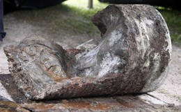 Mất bao lâu để một xác chết phân hủy trong một khối bê tông?