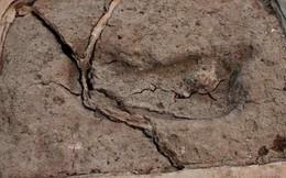 Phát hiện dấu chân người lâu đời nhất ở châu Mỹ