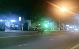 Bò 'điên' gây náo loạn đường phố, húc 6 người bị thương