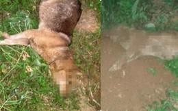 """Chó nuôi lâu năm bị """"cẩu tặc"""" đập gãy chân chết, chôn xuống đất vẫn bị đào lên gây phẫn nộ"""