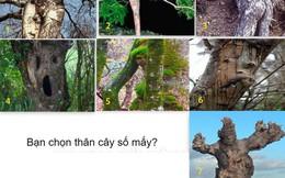 Tưởng không liên quan, nhưng hình dáng thân cây kỳ dị bạn chọn bộc lộ sự thật về chính bạn