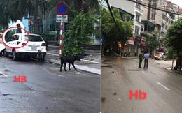 Phong tỏa cả tuyến phố ở Hà Nội để bắt 3 con chó lao ra từ xe Mazda