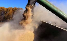 Phá thỏa thuận đình chiến, TQ gửi tín hiệu sắc lạnh đến Washington: Ngừng mua đậu tương Mỹ
