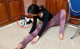 Cô gái đang tập Yoga thì phát hiện loạt phản ứng không ngờ từ chú mèo ngồi bên cạnh