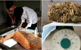 Phát hiện gây sốc trong bụng con nai nặng 30 kg