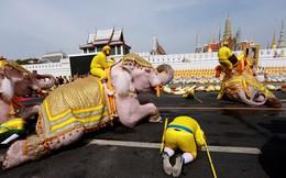 """24h qua ảnh: Voi """"quỳ"""" trước Hoàng cung Thái Lan mừng Quốc vương đăng quang"""