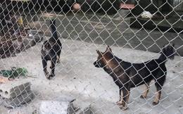 Khởi tố vụ án bé trai 7 tuổi bị đàn chó tấn công tử vong ở Hưng Yên