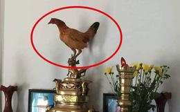 """Đúng ngày giỗ ông lại có con gà bay lên ban thờ, thanh niên hoang mang vì sợ có """"điềm báo"""""""