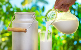 Sữa bò và sữa trâu, uống loại nào tốt hơn?