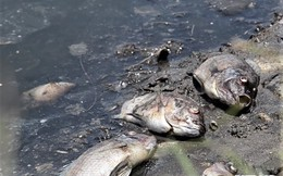 Cá chết 'kỷ lục' nổi trắng hồ Đồng Làng, dân hoang mang không rõ nguyên nhân