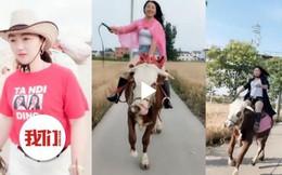 Không có tiền mua ngựa, cô gái học cưỡi bò gây sốt MXH