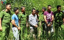 Bắt kẻ chủ mưu vụ hạ độc chết hơn 10ha rừng thông tại Lâm Đồng