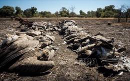 Trên 500 con kền kền quý hiếm bị chết do toán săn voi hạ độc