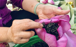 Nghệ nhân U100 làm trà sen, bán giá 7 triệu đồng/kg