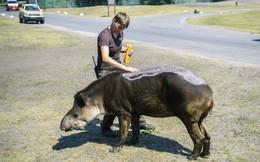 24h qua ảnh: Động vật bôi kem chống nắng trong đợt nắng nóng kỷ lục ở châu Âu