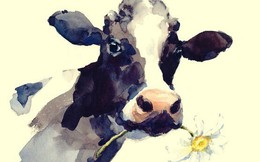 Giết bò của 1 hộ nghèo rồi quay lại xin lỗi, chàng trai không dám tin vào thứ mình nhìn thấy