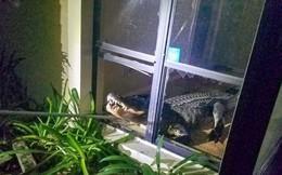 24h qua ảnh: Cá sấu khổng lồ đột nhập nhà dân ở Mỹ