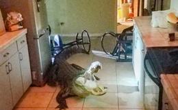 Tỉnh giấc giữa đêm, người phụ nữ hoảng hốt khi nhìn thấy vị 'khách không mời' này trong nhà