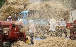 24h qua ảnh: Nông dân tuốt lúa trên cánh đồng