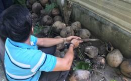 Cảnh sát bắt người đàn ông mua bán ma túy ở miền Tây, chuyên giấu 'hàng cấm' trong vỏ dừa
